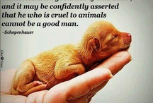 Animal Abuse/Animal Rescue / by Brenda Neal