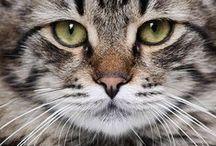 Gatos y Gatitos / by Valentina Becker