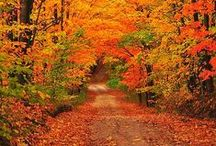FALL INTO AUTUMN / Autumn is my favourite season and it is just around the corner so welcome to my latest board Fall into Autumn. 10 pins a day please. Thanks for sharing and I appreciate all your gorgeous pins.  / by Vostit Video Email
