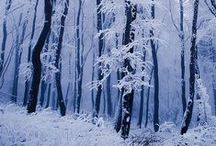 Winter Scenes / by Angie Langford