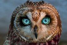 Owls / Búhos