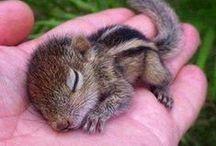 Squirrels / Ardillas