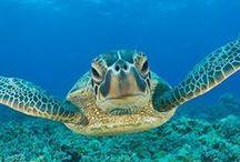 Turtles / Tortugas