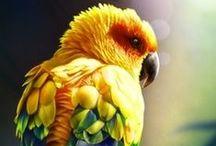 Parrots / Loros