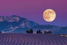 LAVANDE I LOVE YOU! / Tous les plus beaux paysages de lavande des Alpes de Hautes Provence. http://www.tourisme-alpes-haute-provence.com/ All lavender stunning images from Alps Provence http://www.tourism-alps-provence.com/ ENJOY!
