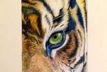 Art: my creations / #tiger #art #matite #policrome #myartwork