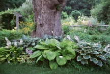 Landscaping Ideas / by Victrocious