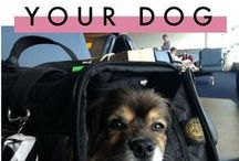 Traveling with your dog / Tips about traveling with your dog.