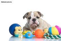 Mascotas Consentidas / Encuentra juguetes, alimento para perro, alimento para gato, correas, artículos de salud y belleza, areneros, platos y bebederos, casas para perro, acuarios, peceras, nidos y jaulas, camas, y más.