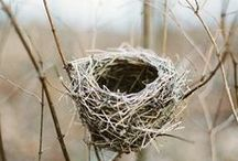Birds and Nests