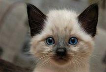 Cats / Funny, cute cats, kitty.