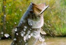 AH LA PÊCHE - FISH ON! / Fishing - Fish on! / by Louise Cardinal