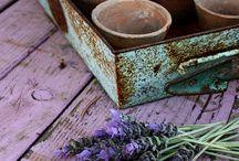 -French Lavender-