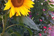 My Secret Garden...