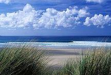 Beach Life / I love the beach , sea shells and love living by the beach