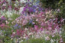 How Does Your Garden Grow / Secret gardens