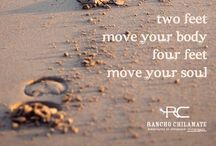 Inspiration & Words to Live By / Equestrian Lifestyle, Inspiration & Words to Live By