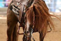 HORSE cavalli stupendi / Beautiful horses