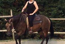 HORSE Lj lena jess / Quarter horse buckskin