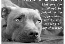 Stop BSL & animal abuse. ADOPT DON'T SHOP / by sarka annunziato