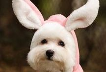 Easter Doggie / Some items and tips to help you enjoy Easter with your pooch!