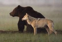 Wolfs'n'Bears