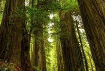 Trees तरवः / Trees