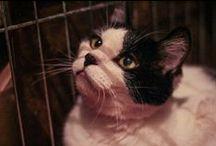 Котейки / О Кошках