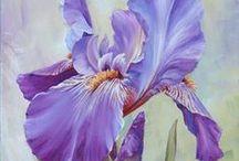 irysy / kwiaty irysy