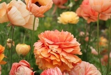 peach-orange flowers / by Kari Young Floral Designs
