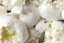 white flowers / by Kari Young Floral Designs