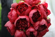 red flowers / by Kari Young Floral Designs