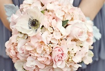 blush / by Kari Young Floral Designs