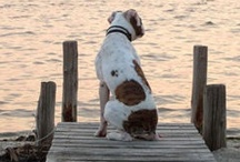 Animals on the Water / Life is better on the water...but it is the BEST when man's best friend is right out there with you! / by Nashville Boat Show