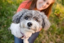 """Pinterest Cutest Pets Community Group Board / Here, you are free to pin your pawesome pet pins. Pin all types of dog, puppy, cat, kitty, or other pet images. NO SPAM, NUDITY OR ADS. ONLY PETS. If you haven't already been invited, all you have to do is follow this board and then email alex@vspets.com with """"Pinterest Pets Community Group Board"""" in the subject line & include your Pinterest name in the body of the email. You will then be invited to contribute to the board. Members, please feel free to invite your paw-friends! - www.VSPETS.com"""