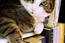 Your Pet Caught Reading! / Show us pictures of your pets reading their favorite books! To send in your picture, email sspearswells@acpl.info. Please include the name of your pet and the title of the book!