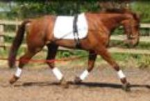 Horse Lungeing & Schooling Aids – Horse Training Aids UK: Lungeing Cavessons, Rollers / For horse training, we have horse lungeing and schooling aids, horse training aids, lungeing cavessons, rollers, lunge reins/long reins, etc.  / by Dragonfly Saddlery