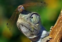 Reptiles and Amphibians / Lizards, frogs, turtles, and more!