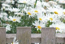 Garden delights / by karen hires