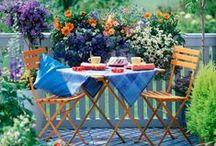 terrace & garden ideas!