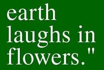 natural beauty.... / plants & flowers