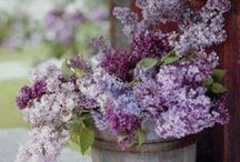 Garden Inspiration / Green, white, lilac, purple, dusty pink and blues only