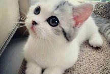 Cute/happy/goals
