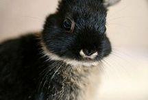 Tamborina y otros conejos / Conejos
