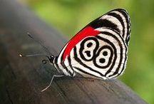 Butterfly Effect / butterflies
