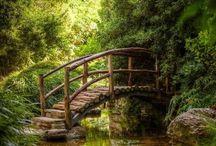 Natuur / Wij zouden vaker in de natuur moeten zijn .Om schoonheid en kracht te ervaren. Om te voelen dat we een deel ervan zijn. Zodat we er dankbaar voor zijn. En er zuinig mee omgaan.