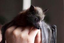 Bats n' cuteness