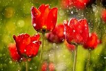 flores flores flores / by RE CR