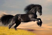 Horses / Konie