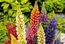 kwiaty do ogrodu, Must Have:)